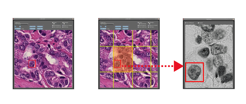 Images from the MicroTracker software